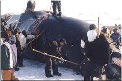 alaska_whaling.jpg