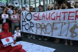 anti-whaling_australia.jpg