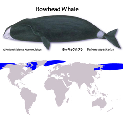 bowhead_map.jpg